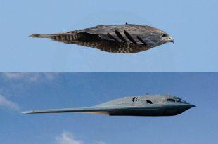 Northrop Grumman B-2 Spirit Bomber.