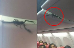 Watch People On Lion Air flight Freak Out As A Scorpion Crawls Out Of Overhead
