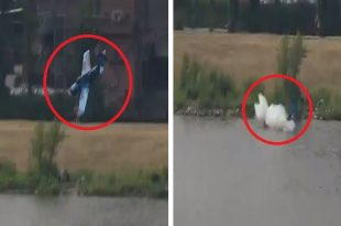 Dramatic Video Shows Yak-52 crashes into river at Polish airshow, killing pilot