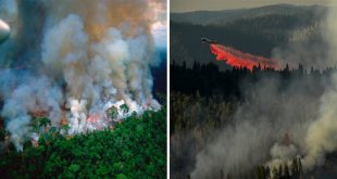 Amazon fires: Brazil To Deploy Military To Tackle Blazes As 747 Supertanker Arrives In Bolivia