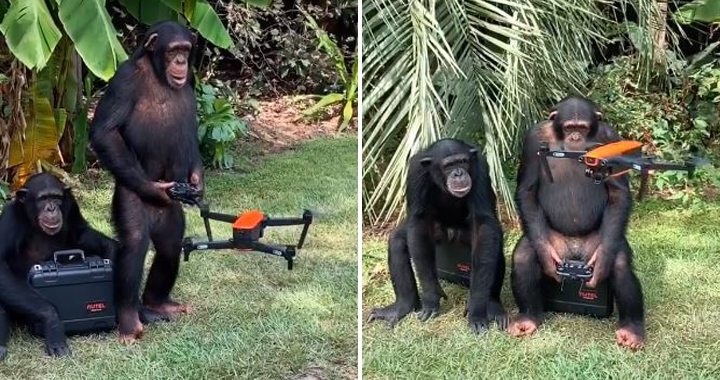 Watch: Apes Flying Drone